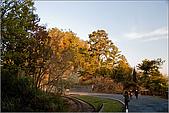 2009阿里山櫻花季:IMGP7490.jpg