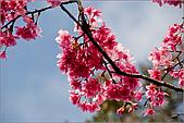 98.02.28陽明山花季:nEO_IMG_IMGP6257.jpg