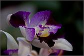 2009台北國際花卉展:花草集:nEO_IMG_IMGP7063.jpg