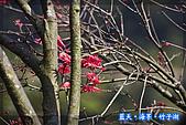 97.03.27藍天‧海芋‧竹子湖:nEO_IMG_IMGP7078.jpg