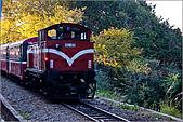 2009阿里山櫻花季:IMGP7496.jpg