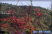 97.03.27藍天‧海芋‧竹子湖:nEO_IMG_IMGP7079.jpg