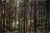 2009阿里山櫻花季:IMGP7503.jpg