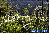97.03.27藍天‧海芋‧竹子湖:nEO_IMG_IMGP7083.jpg