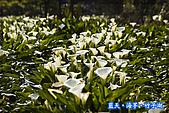 97.03.27藍天‧海芋‧竹子湖:nEO_IMG_IMGP7084.jpg