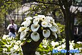 97.03.27藍天‧海芋‧竹子湖:nEO_IMG_IMGP7085.jpg