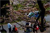2009阿里山櫻花季:IMGP7507.jpg