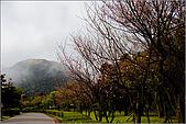 98.02.28陽明山花季:nEO_IMG_IMGP6262.jpg