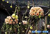 97.03.27藍天‧海芋‧竹子湖:nEO_IMG_IMGP7086.jpg