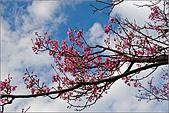 98.02.28陽明山花季:nEO_IMG_IMGP6263.jpg