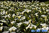 97.03.27藍天‧海芋‧竹子湖:nEO_IMG_IMGP7087.jpg