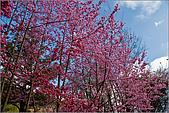 98.02.22武陵農場遇見櫻花的那一刻:1009.jpg