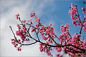 98.02.28陽明山花季:nEO_IMG_IMGP6264.jpg