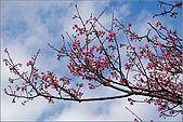 98.02.28陽明山花季:nEO_IMG_IMGP6265.jpg