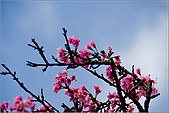 98.02.28陽明山花季:nEO_IMG_IMGP6266.jpg