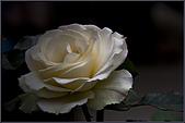 2009士林官邸玫瑰季:nEO_IMG_IMGP5520.jpg