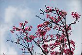 98.02.28陽明山花季:nEO_IMG_IMGP6267.jpg