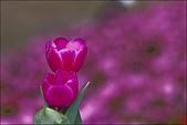 2009台北花卉展花草集:nEO_IMG_IMGP3051.jpg