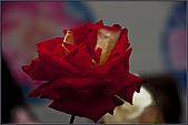 2009士林官邸玫瑰季:nEO_IMG_IMGP5522.jpg