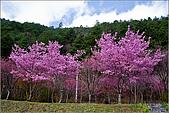 98.02.22武陵農場遇見櫻花的那一刻:2002.jpg