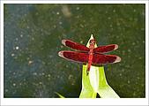 97.09.06富陽自然生態公園:cc31.jpg