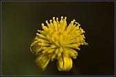 97.02.16植物園微距:nEO_IMG_IMGP5349.jpg