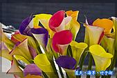 97.03.27藍天‧海芋‧竹子湖:nEO_IMG_IMGP7114.jpg