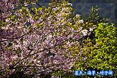 97.03.27藍天‧海芋‧竹子湖:nEO_IMG_IMGP7117.jpg
