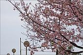 98.03.05天元宮‧吉野櫻進行式:nEO_IMG_IMGP6694.jpg