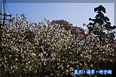 97.03.27藍天‧海芋‧竹子湖:nEO_IMG_IMGP7118.jpg