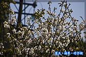 97.03.27藍天‧海芋‧竹子湖:nEO_IMG_IMGP7119.jpg