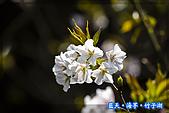 97.03.27藍天‧海芋‧竹子湖:nEO_IMG_IMGP7120.jpg