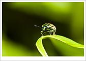 97.09.06富陽自然生態公園:cc35.jpg