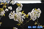 97.03.27藍天‧海芋‧竹子湖:nEO_IMG_IMGP7122.jpg
