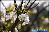 97.03.27藍天‧海芋‧竹子湖:nEO_IMG_IMGP7123.jpg
