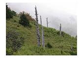 台灣美景:台灣-雪山20
