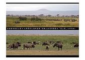台灣美景:非洲-肯亞生態之旅07