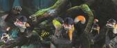 古魯家族:拳頭猴-1.jpg
