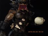2015_MAY_桐花_賞螢_夢暑來:27MAY2015_三創公仔群 (21).JPG