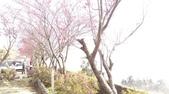 2015_JAN_三陽開泰_迎春曦:2015-01-31 10.48.33.jpg