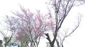 2015_JAN_三陽開泰_迎春曦:2015-01-31 10.49.18.jpg
