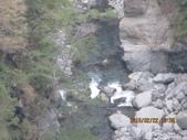 南橫東段風光/台東鹿野溪鹿鳴橋與紅葉溫泉:IMG_4729.JPG