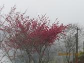 南橫東段風光/台東鹿野溪鹿鳴橋與紅葉溫泉:IMG_4735.JPG