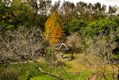 2014.12.09_溪州公園:2014.12.09_溪州公園0010.JPG