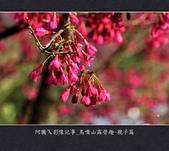 2013.01.20_鳥嘴山露營趣-親子篇:2013.01.20_鳥嘴山露營趣-親子篇-0011.jpg