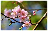 2013.02.06_大溪果園-尼康篇:2013.02.06_大溪果園-Nikon-0001.jpg