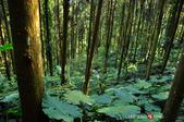 2014.04.05_溪頭遊記-風景篇:2014.04.05_溪頭遊記-風景篇0015.jpg