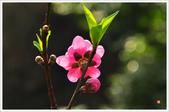 2013.02.06_大溪果園-尼康篇:2013.02.06_大溪果園-Nikon-0012.jpg