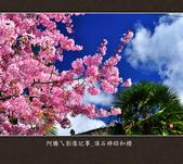 2013.02.14_嘉義頂石棹昭和櫻:2013.02.20_頂石棹昭和櫻-0004.jpg
