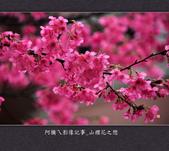2013.02.01_山櫻花之戀:2013.02.01_山櫻花之戀-0018.jpg
